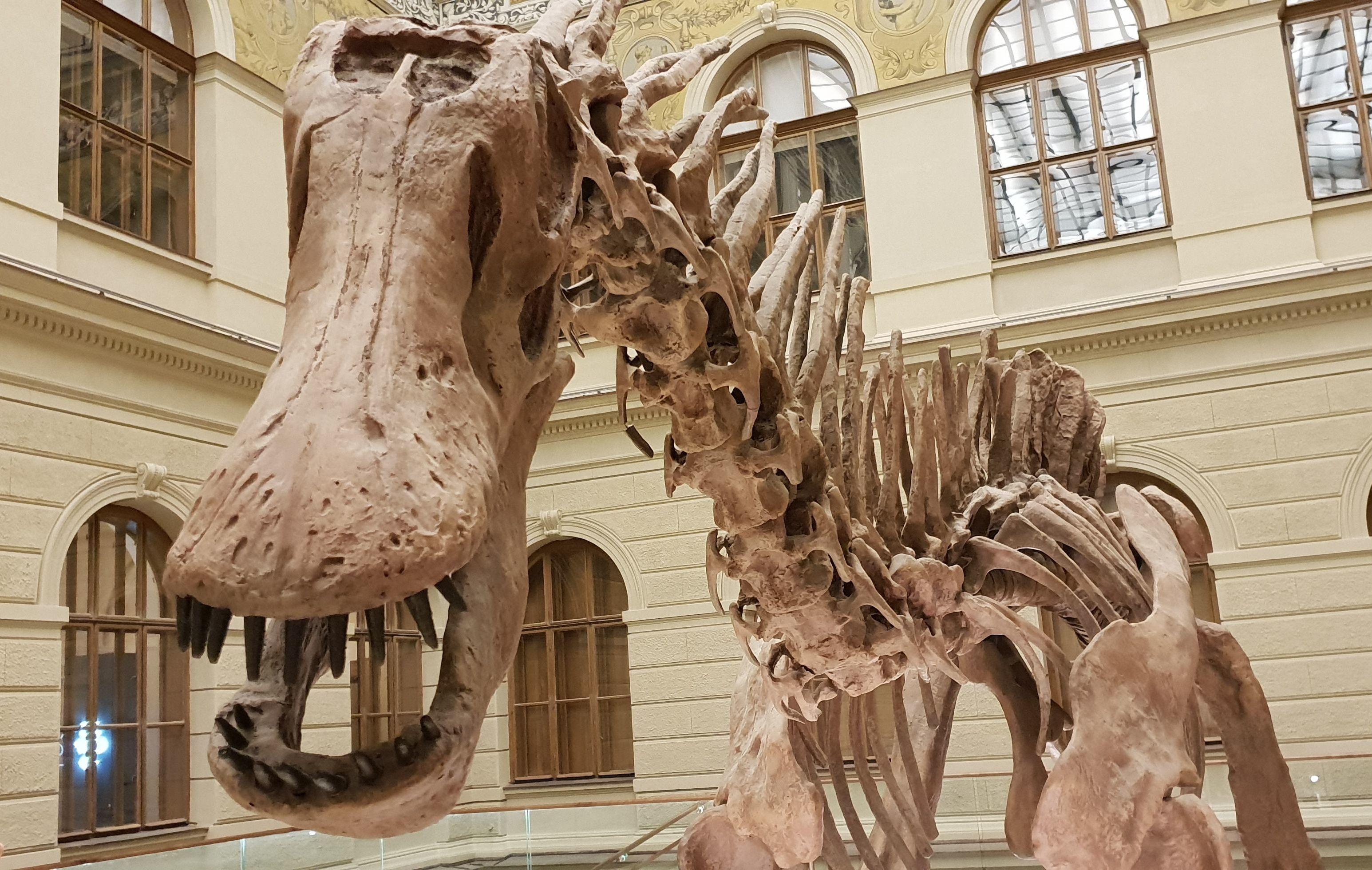 Muzejní noc-dinosaurus