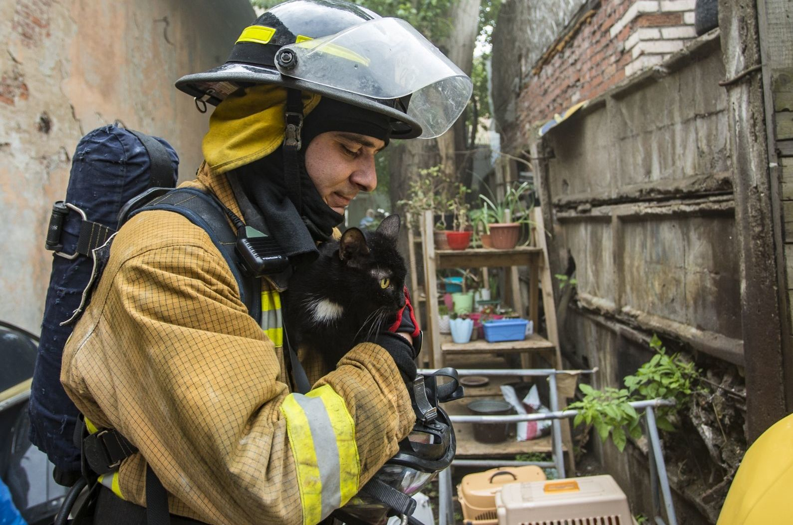 300 koček a 7 psů bylo zachráněno z hořícího útulku v Petrohradě