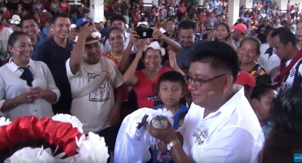 V Mexiku se starosta města oženil se samicí krokodýla