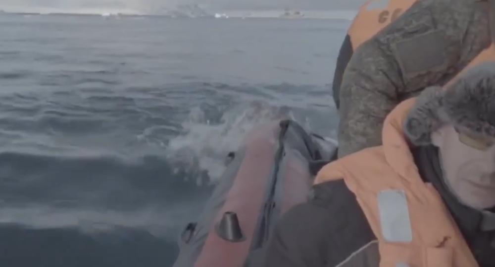 Video: Expedice Severního loďstva RF a Ruské geografické společnosti v Arktidě se snaží ubránit útoku samice mrože