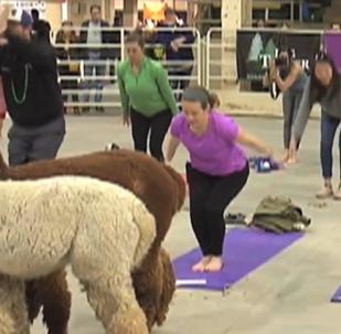 Zlepšete si náladu: Lama dává Američanům jógu a úsměvy zdarma! (VIDEO)