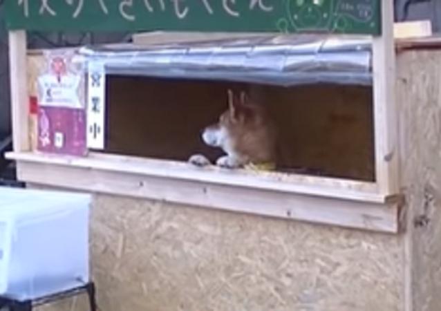 Pracovitý pes. V Japonsku prodává pes brambory (VIDEO)