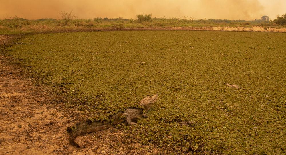 Přírodní katastrofa v Brazílii: živočišným a rostlinným druhům hrozí úplné vyhynutí kvůli rekordně ničivým požárům