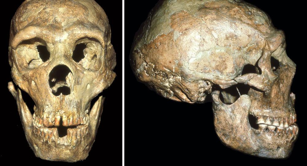 Lebka neandertálce