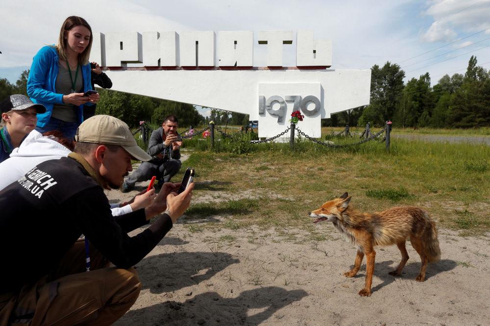 Lidé fotografují lišku v opuštěném městě Pripjať, v blízkosti jaderné elektrárny v Černobylu na Ukrajině.