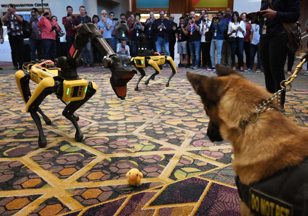 Pes K9 a robotický pes Spot během konference Amazon Re: MARS.