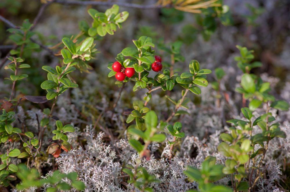 Severní země divů: Karelské lesy