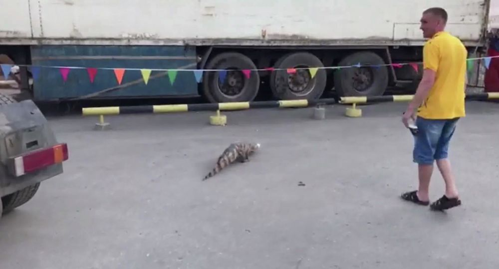 Na Sibiři na parkovišti našli krokodýla. Utekl z cirkusu