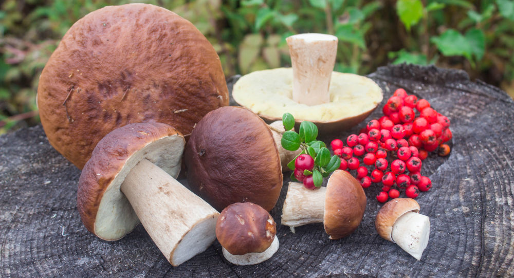 Houby a lesní plody. Ilustrační foto