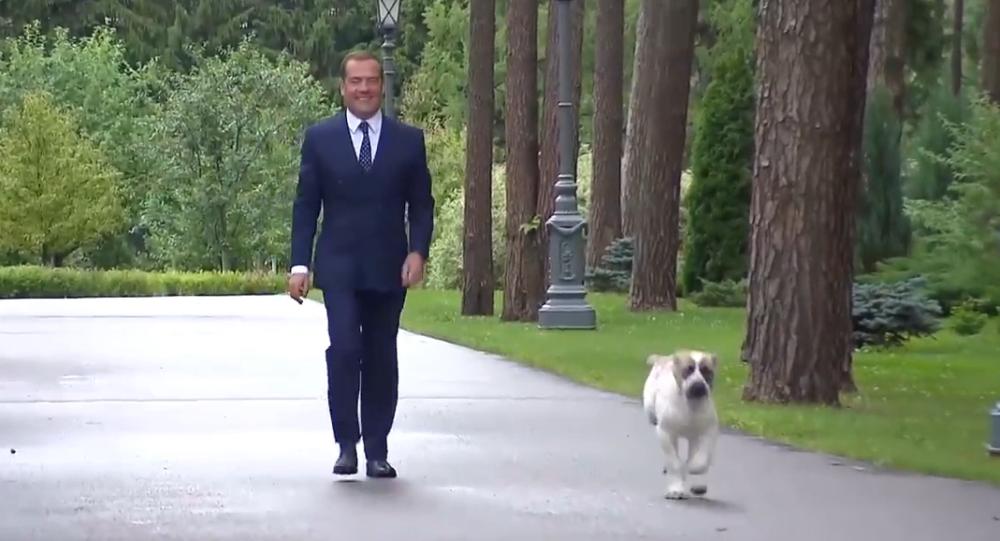 Video: Ruský premiér Medveděv ukázal své štěně, které si volně běhá po sálech a místnostech jeho předměstské rezidence