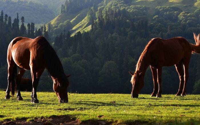 Koně v Ritzinském národním parku