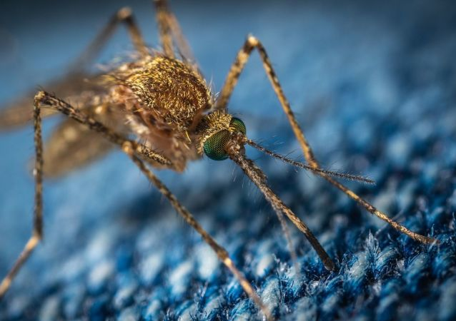 Komár