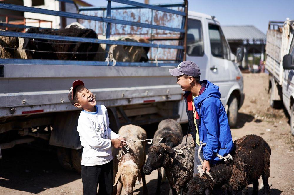 Trh s dobytkem