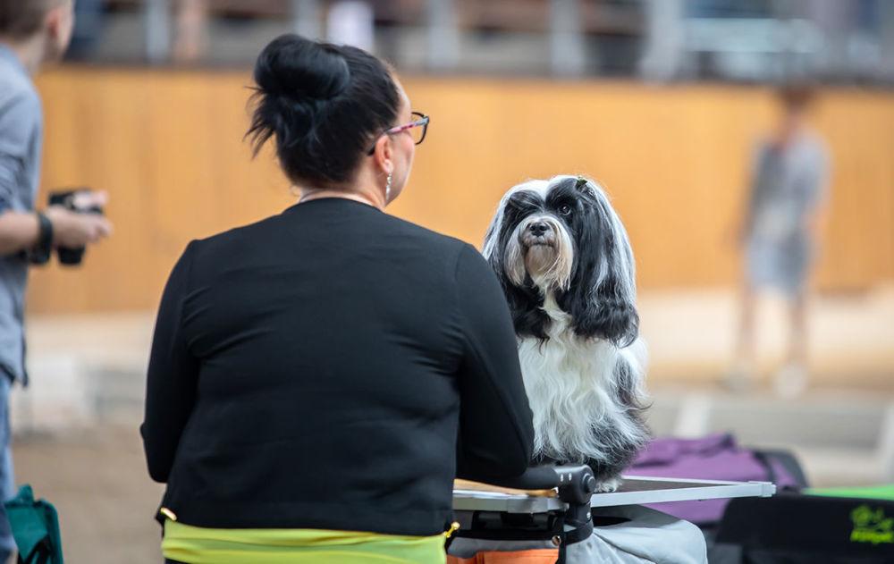 Černobílý pes na Mezinárodní výstavě psů v Minsku