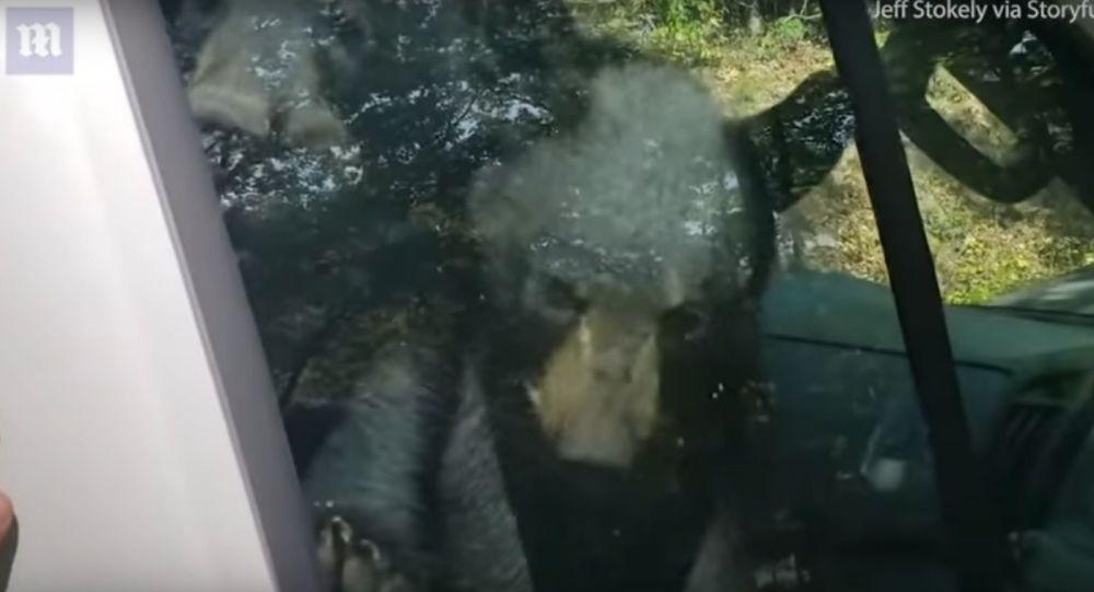Medvědí mláďata, která uvízla v autě, si pomocí klaksonu zavolala o pomoc majitele auta
