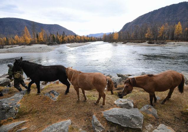 Místní obyvatel vede koně na pastvinu poblíž vesnice Alygdžer v Irkutské oblasti