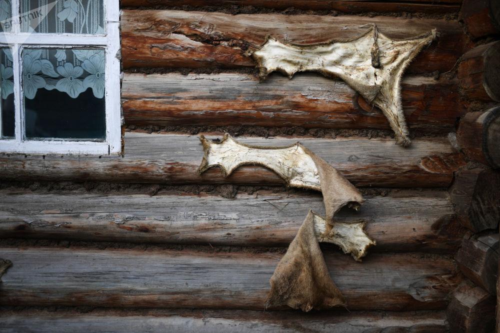 Kůže divokých zvířat na zdi domu