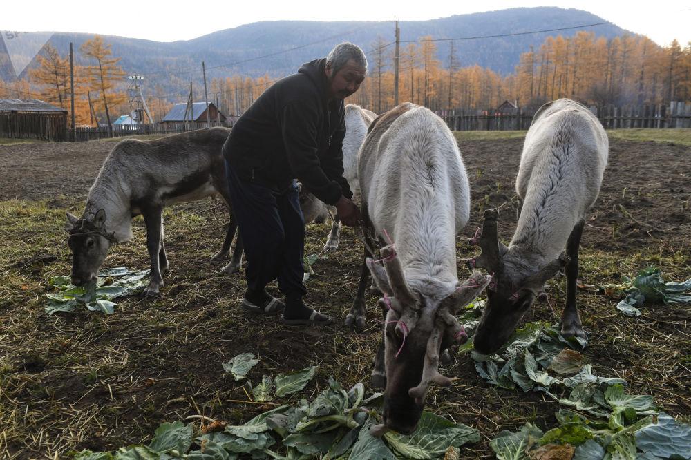 Muž krmí jeleny