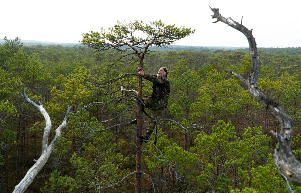 Běloruský ornitolog Vladimir Ivanovskij staví hnízdo pro dravce.