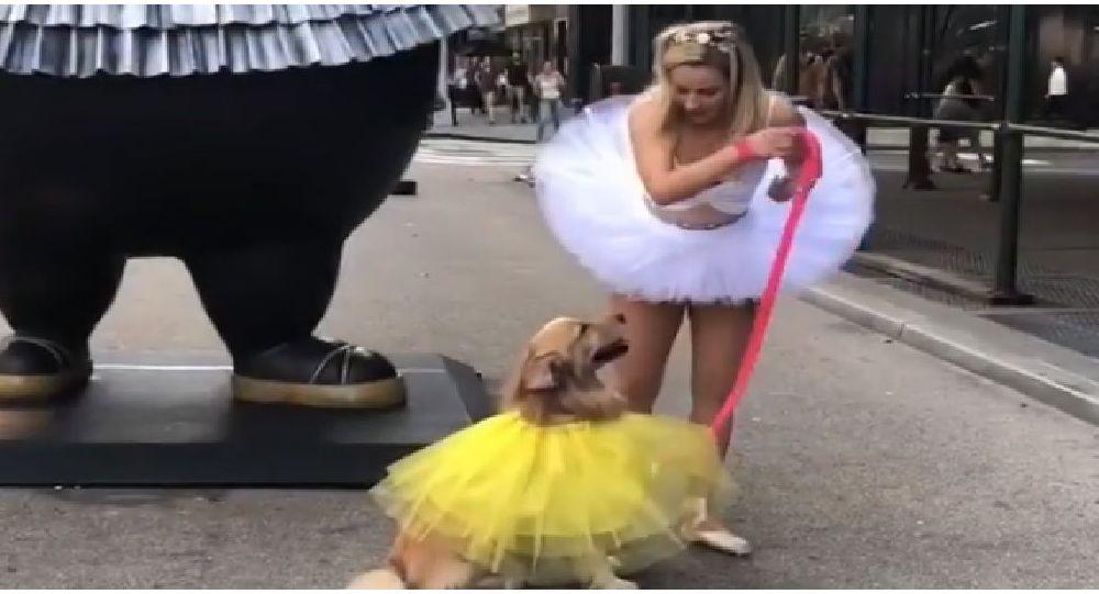 Zlatý retrívr a baletka