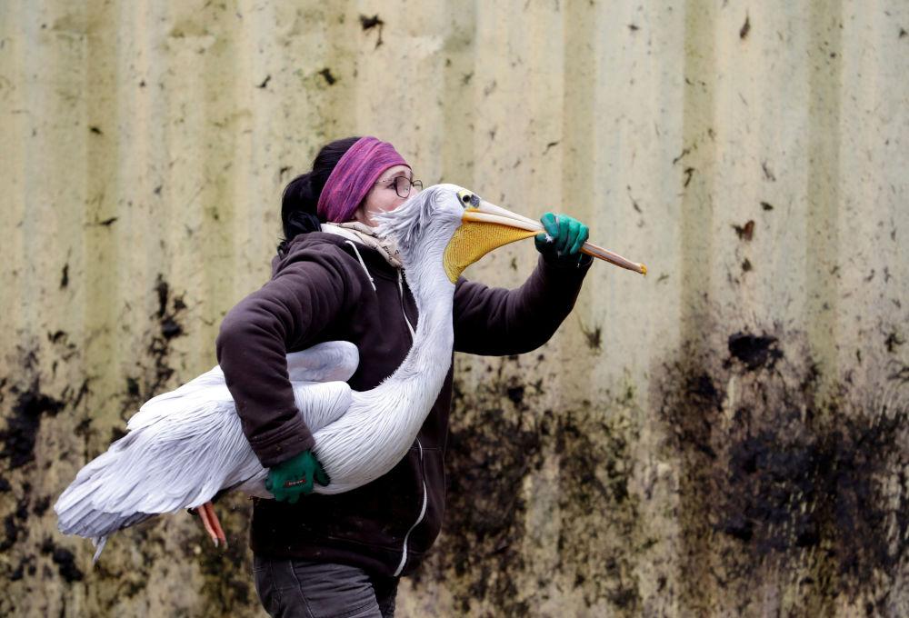 Nejživější fotografie tohoto týdne z celého světa: Česká republika, Rusko, USA, Irák a další země objektivem fotoaparátu