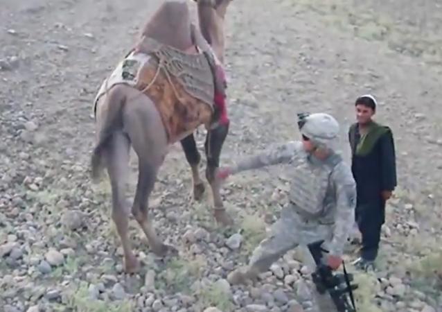 Velbloud kopnul amerického vojáka v Iráku