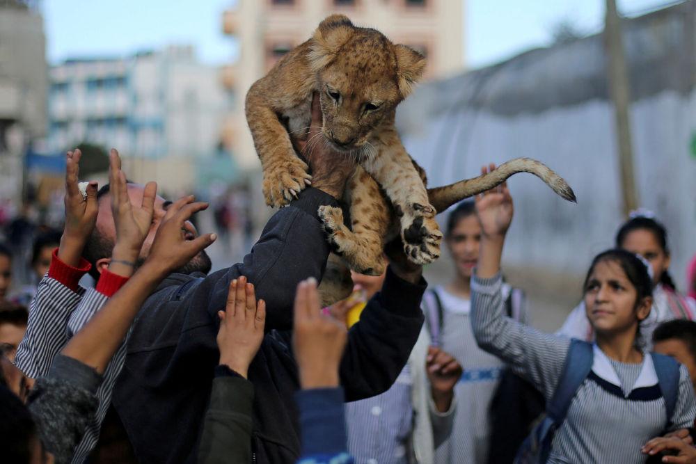 Muž ukazuje lvíče dětem v uprchlickém táboře v Gaze.