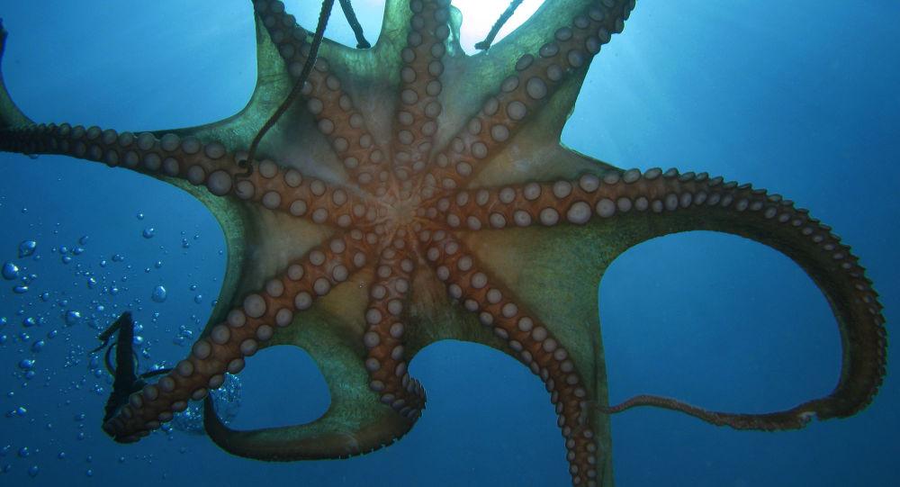 Boj do posledního dechu: V Kanadě orel zaútočil na obří chobotnici, ale málem se stal její obětí. Jak to dopadlo? Video