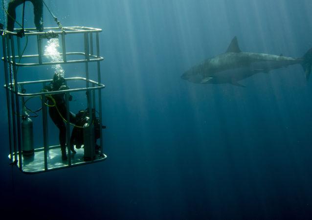 žralok a potápeč