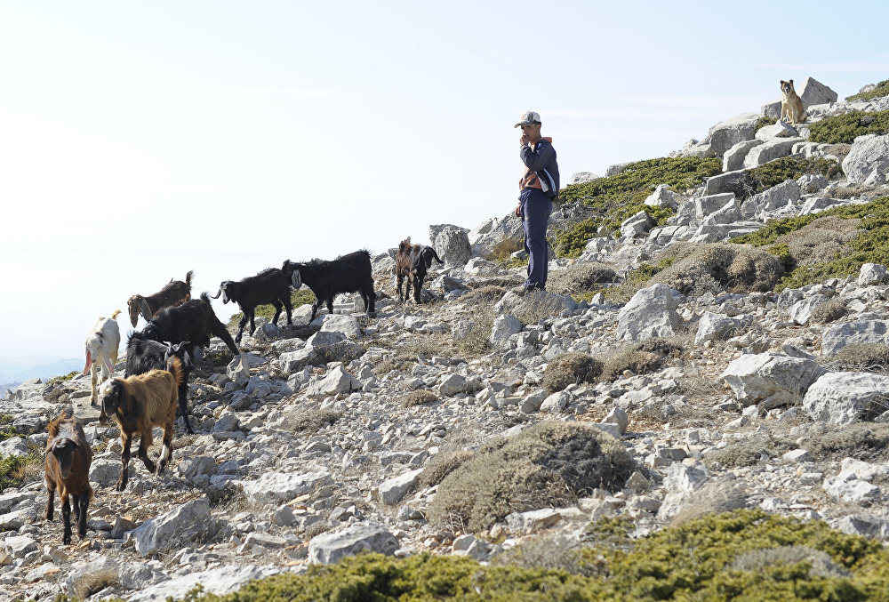 Pasák koz nedaleko Slenfe.