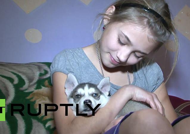 Rusko: 12letá dívka dostala od Putina jako dárek na Silvestra štěně husky