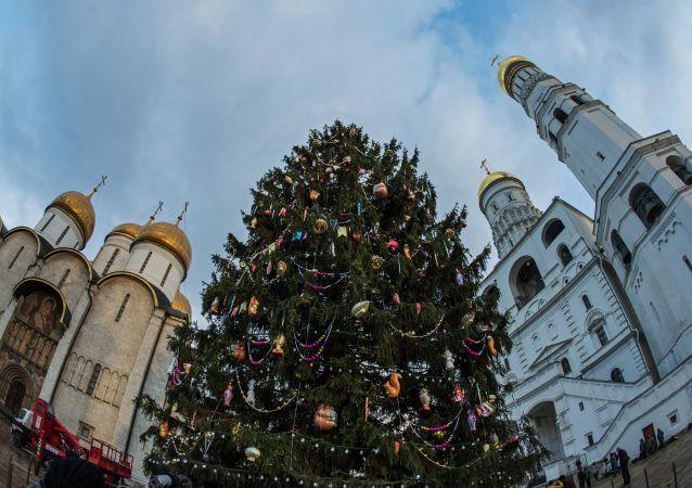 Hlavní novoroční stromeček Ruska byl doručen do hlavního města z Moskevské oblasti