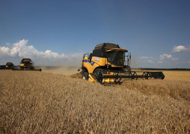Sklizeň pšenice na jihu Ruska