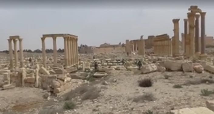 Český novinář ze Sýrie: záběry z osvobozené Palmýry