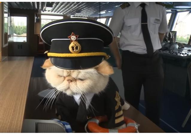 Kočky na palubě! Chlupatí námořníci vás vezmou na perrrfektní plavbu