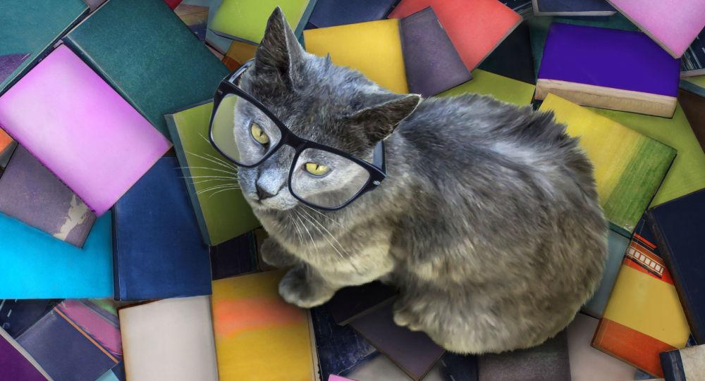 Kočka v brýlích