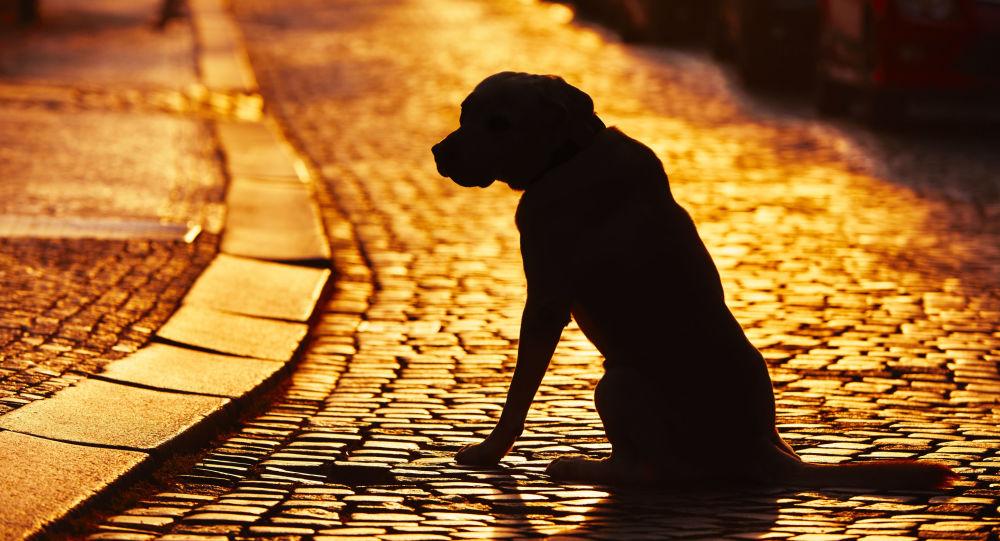 Pes na ulici