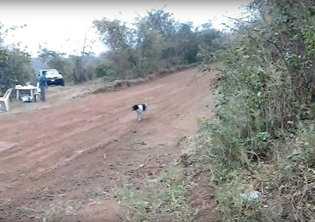Nejšťastnější pes na světě žije v Bolívii