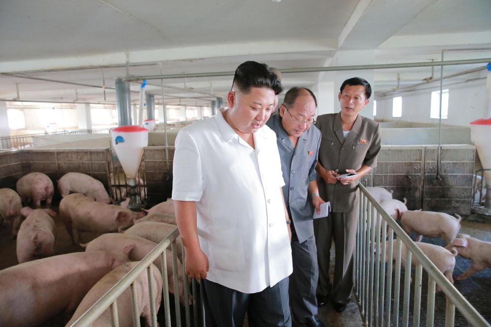 Vepřové činí příbližně tři čtvrtiny masa, které se vyrábí v KLDR