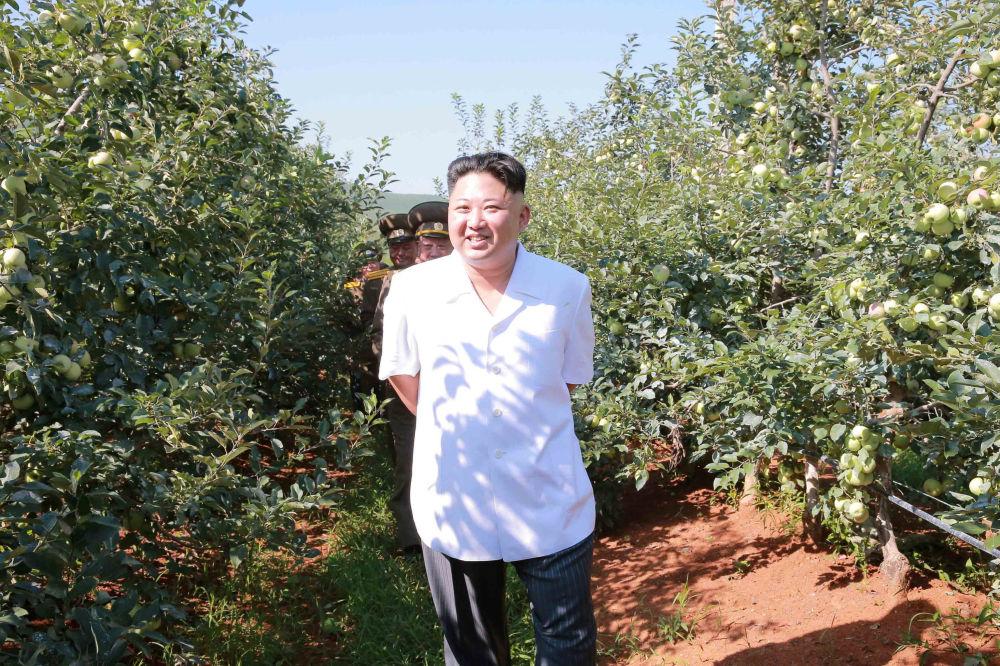 Zemědělství v KLDR trpí nedostatkem země vhodné k obhospodařování