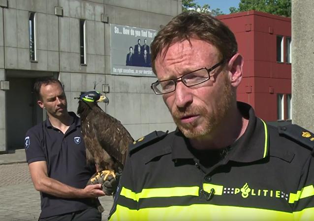 Policie Nizozemska naučila dravé ptáky lovit bezpilotní letouny