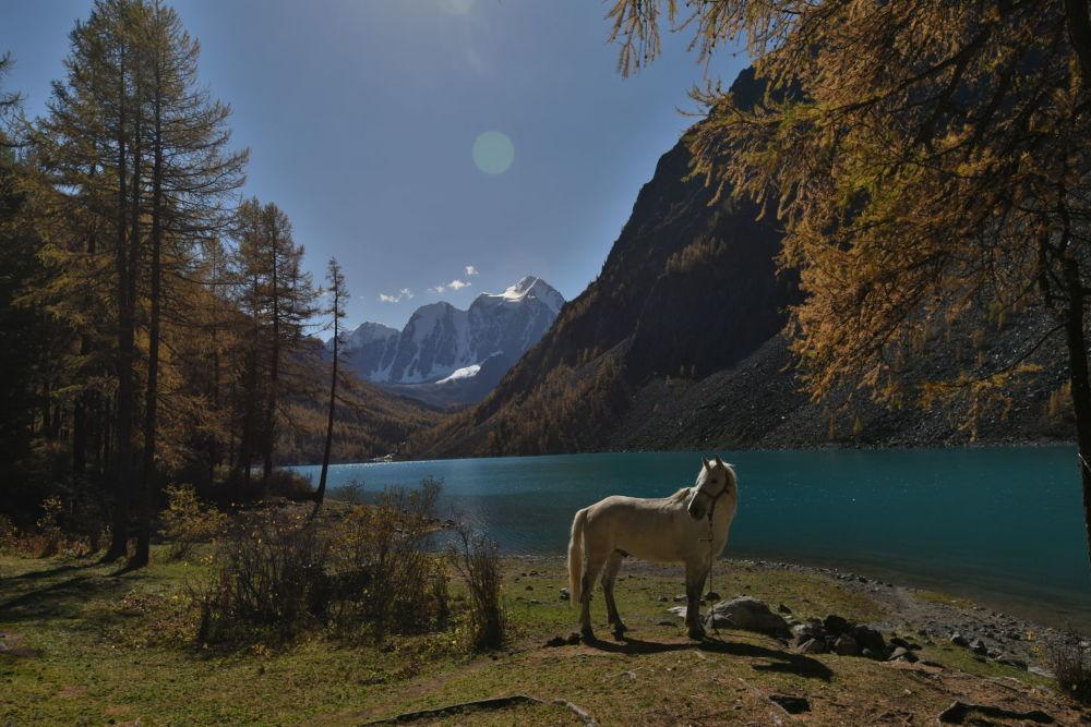 Kůň pasoucí se na břehu Dolního Švalinského jezera