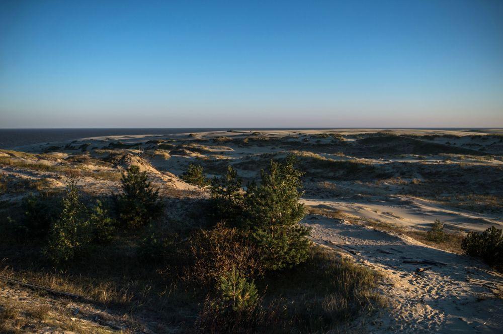 Kuršskákosa – vizitka Jantarového kraje