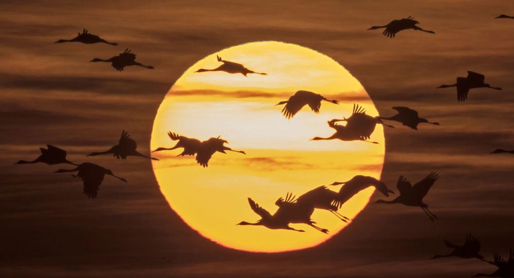 Ptáci na pozadí slunce