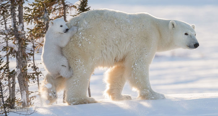 Nejlepší fotografie divoké přírody