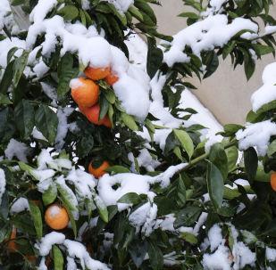 Sníh, vánice a další zimní exotika v různých zemích