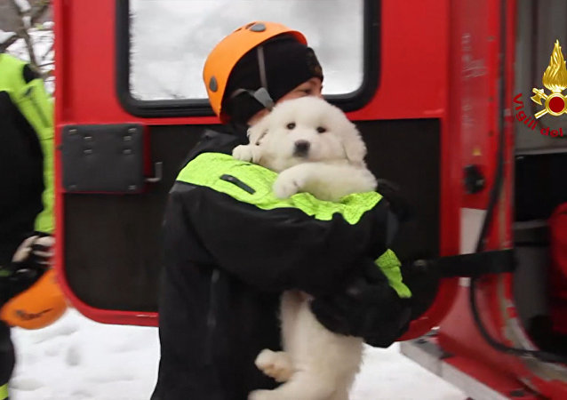 Z italského hotelu, který zavalila lavina, zachránili tři štěňata