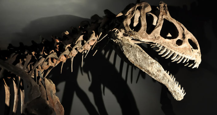 Kostra dinosauru. Ilustrační foto