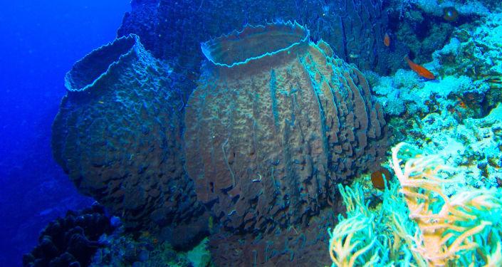 Mořské houby. Ilustrační foto