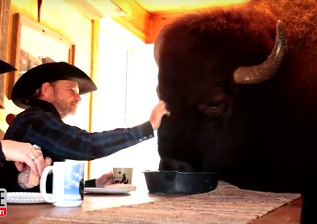 Americký pár u sebe doma ubytoval ohromného bizona